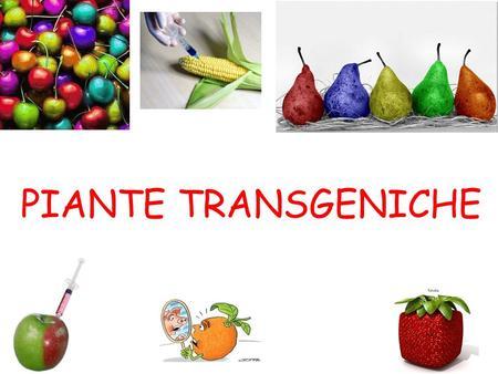PIANTE TRANSGENICHE. PRODUZIONE di PIANTE TRANSGENICHE IMPORTANTE caratteristica delle cellule vegetali: TOTIPOTENZA Questa caratteristica è alla base.