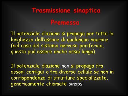 Trasmissione sinaptica