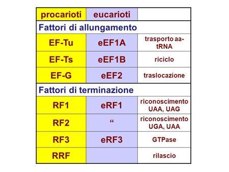 Procariotieucarioti Fattori di allungamento EF-TueEF1A trasporto aa- tRNA EF-TseEF1B riciclo EF-GeEF2 traslocazione Fattori di terminazione RF1eRF1 riconoscimento.