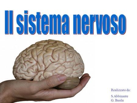 Il sistema nervoso Realizzato da: S.Abbinante G. Basile.