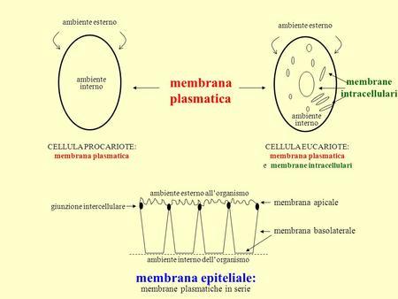 Membrana plasmatica ambiente interno ambiente esterno ambiente interno membrane intracellulari CELLULA PROCARIOTE: membrana plasmatica CELLULA EUCARIOTE: